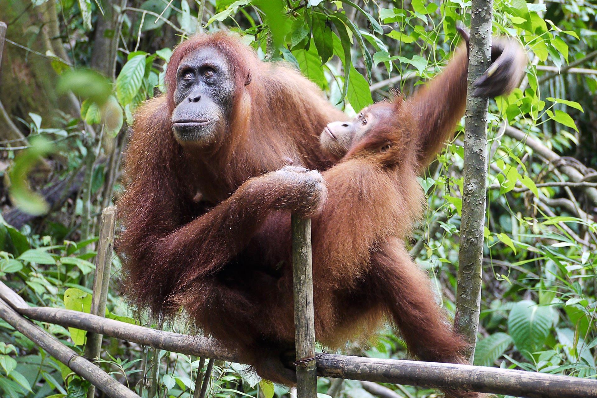 Индонезия и Малайзия – Сердце Южного моря