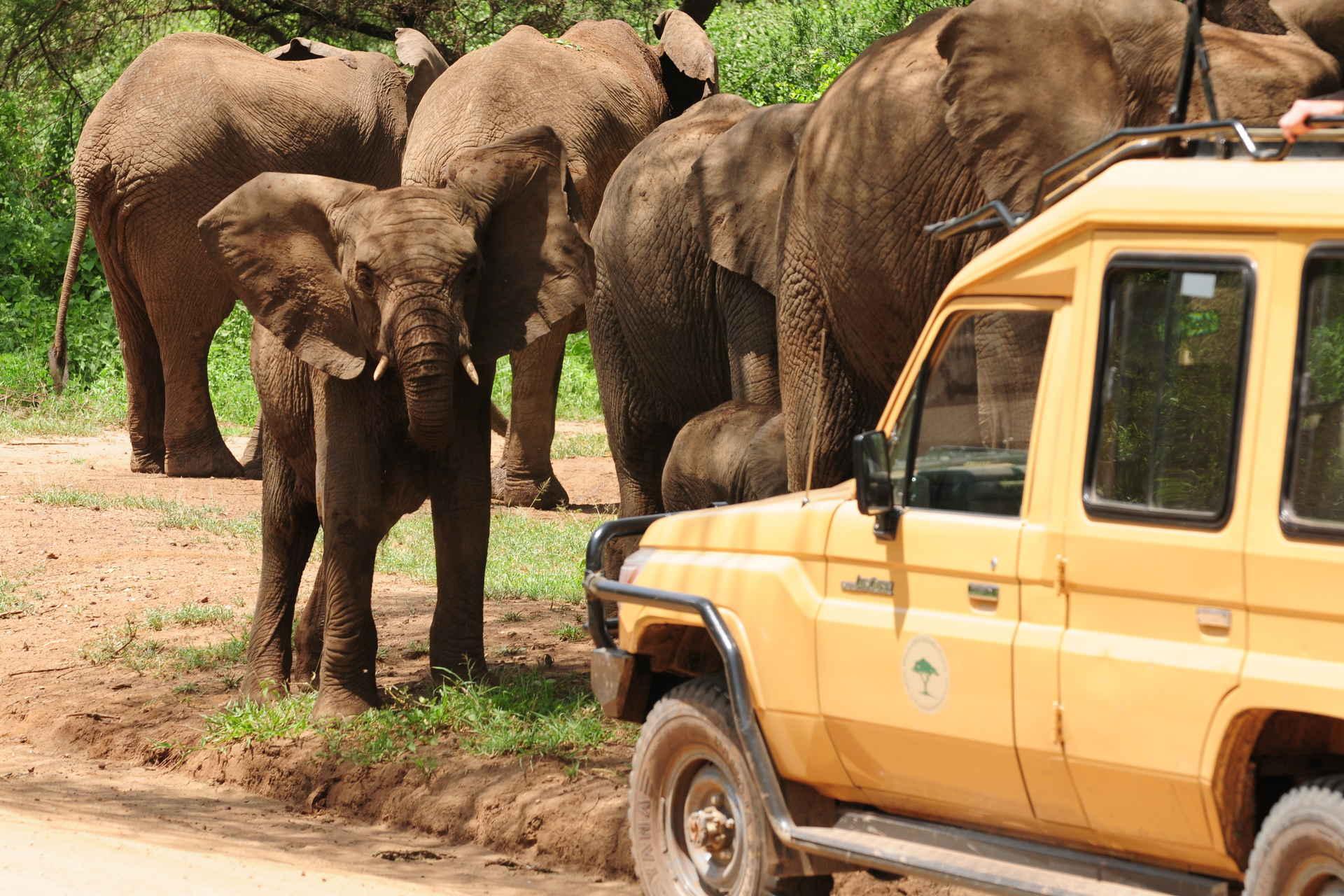Новый год в Африке: Танзания, Кения и Занзибар