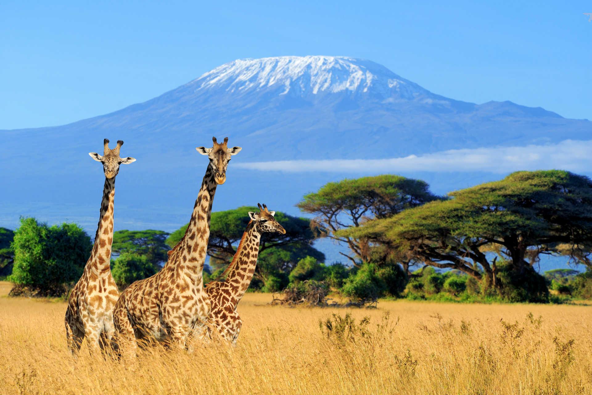 Фототур в Африку: Занзибар, масаи и нацпарки Танзании