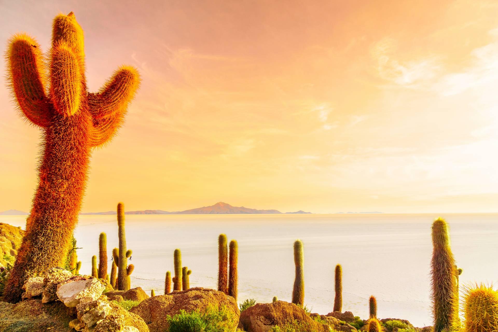 Боливия и Чили – солнце, соль и миражи