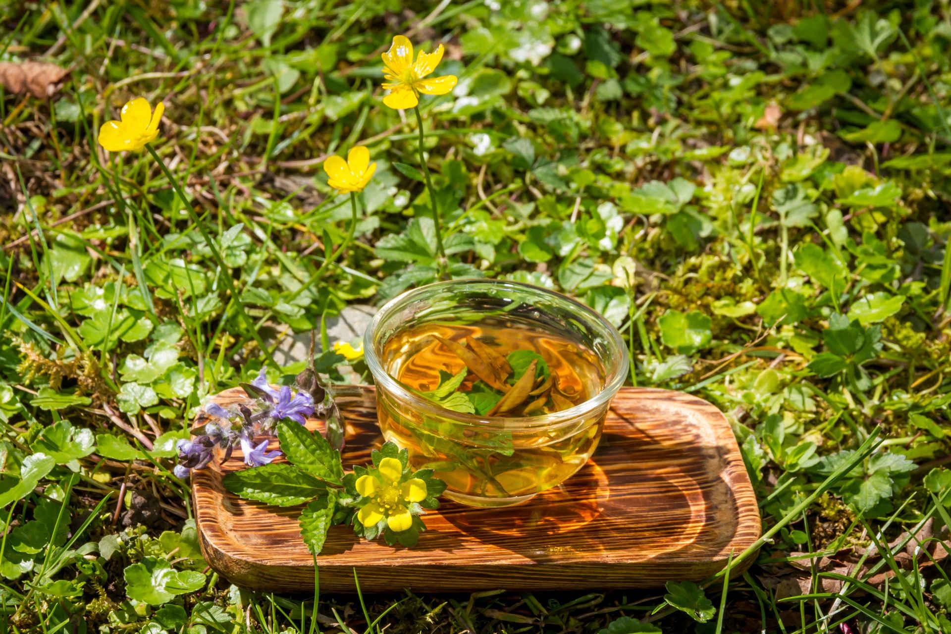 Май-чай: путешествие по Абхазии