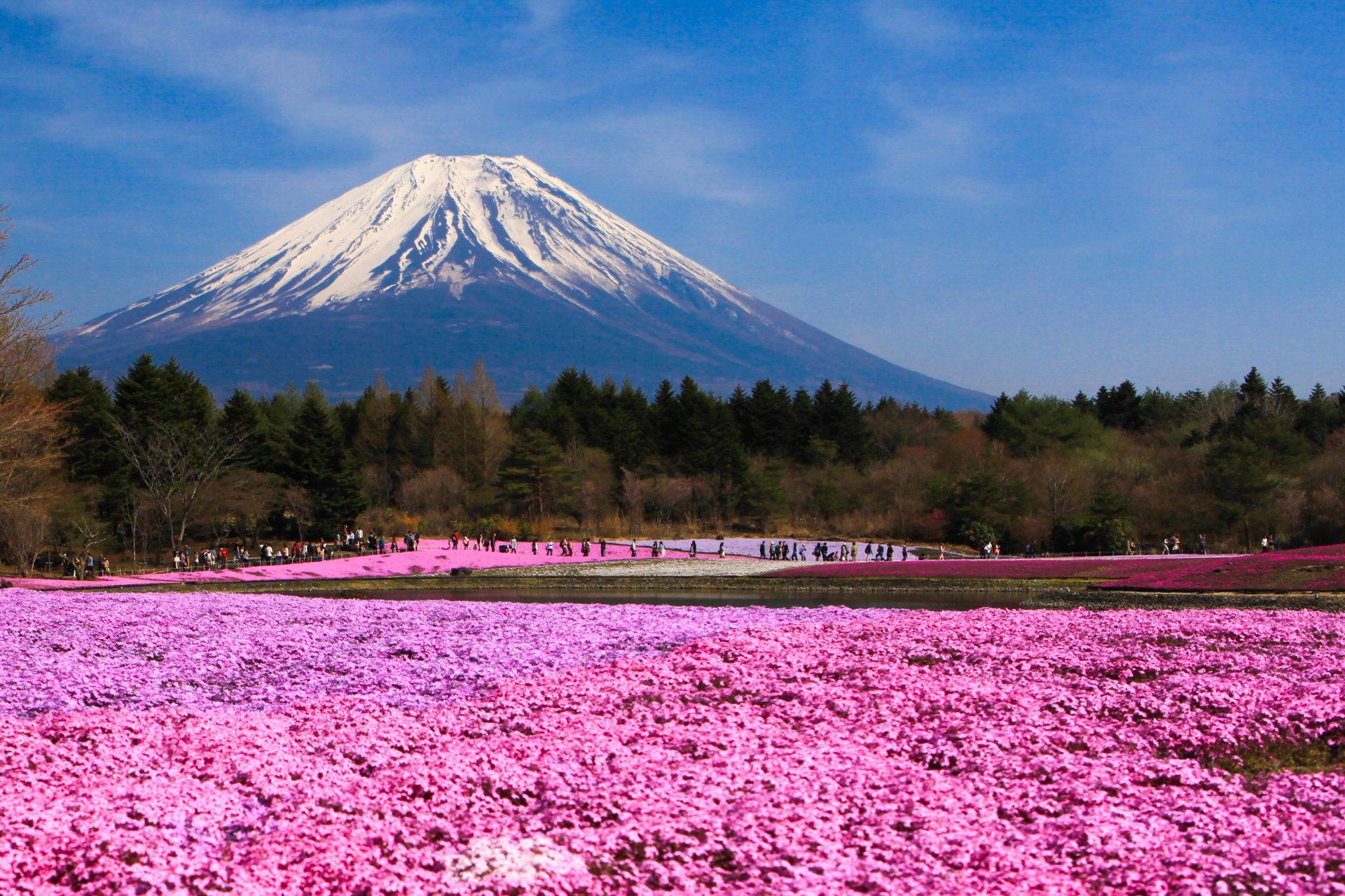 Япония – под цветочным дождем